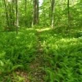 20200415-Turtle-Creek-Trail-Photo.jpg#asset:2517