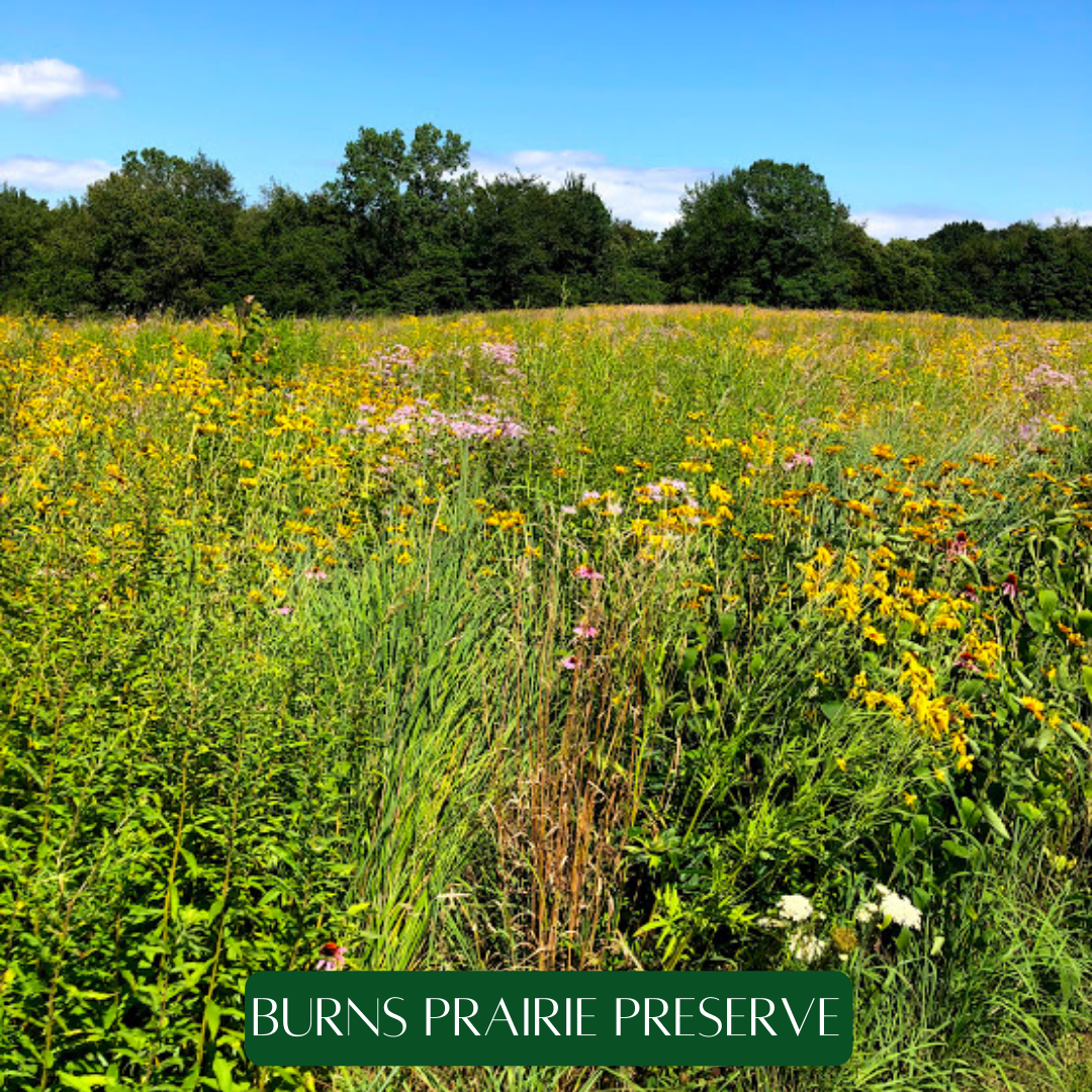 Burns Prairie Preserve
