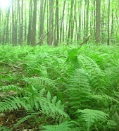 carpet-of-fern.jpg#asset:1266:url