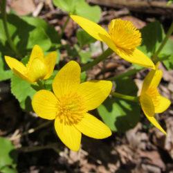 2014 Spring Wildflower Walk